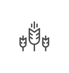 wheat line icon vector image