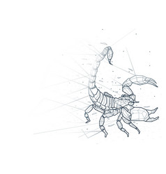 Abstract scorpion low poly wireframe vector