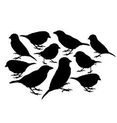 Big collection sparrow bird silhouette vector