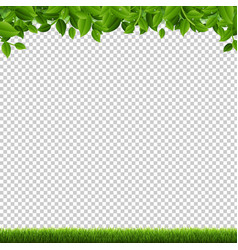 green grass and leaves border transparent vector image