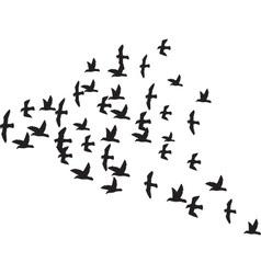 A Flock of Birds vector image