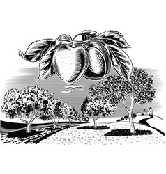 Branch apricot orchard vector