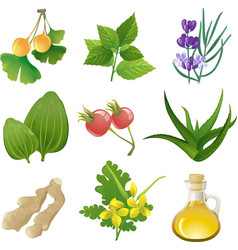 herbal medicine vector image