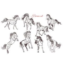 set of detailed hand drawn horses for design vector image