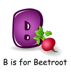 vegetables alphabet b is for beetroot vector image
