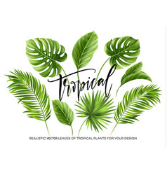 tropical palm leaves set isolated on white vector image vector image