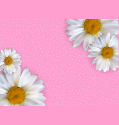 abstract chamomile flowers natural spring and vector image