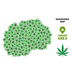 Cannabis collage makedonia map vector
