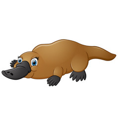happy platypus isolated on white background vector image