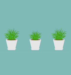three flower pots with growing grass icon set vector image