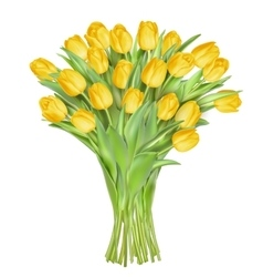 Tulips on white background EPS 10 vector image vector image