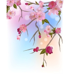 Background with gentle sakura branches vector image vector image