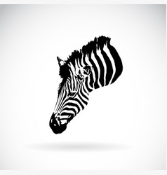 an zebra head on white background wild animals vector image