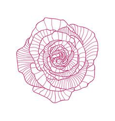 Detailed linear graphic art of rose flower vector