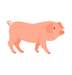 Farm animal - pig vector