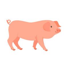 farm animal - pig vector image