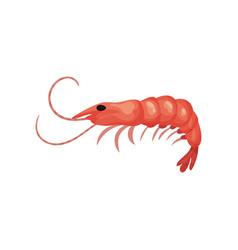 Flat icon of big fresh shrimp prawn with vector