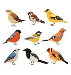 winter birds isolated wild bird cartoon vector image