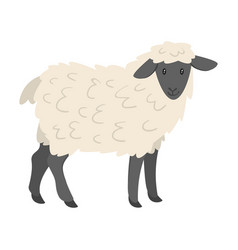 farm animal - sheep vector image