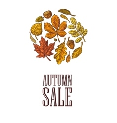 Poster AUTUNB SALE with set leaf and acorn vector image