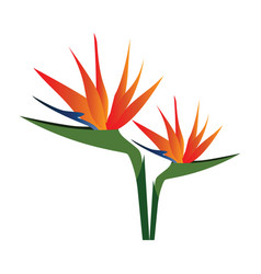 colorful bird of paradise flowers on white vector image