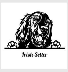 Dog head irish setter breed black and white vector