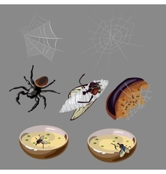 Flies spiders rotten food and insects vector