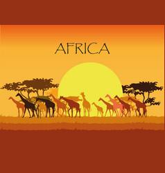 Giraffes silhouettes in savannah vector