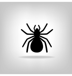 Black spider on a white background vector