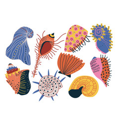 collection of seashells tropical underwater clams vector image