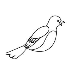 Decorative bird feather animal ornate vector