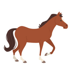 Farm animal - horse vector