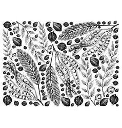 Hand drawn sketch twisted cluster beans and bla vector