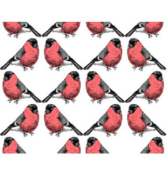 Hand sketched pattern with bullfinches vector