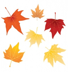 separate autumn leaves vector image