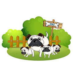 A group of bulldogs near the fence vector