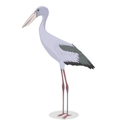Asian openbill cartoon bird vector