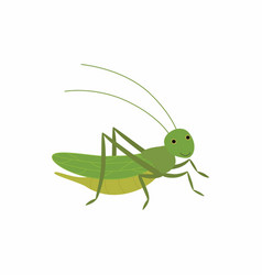 Cartoon funny cricket vector