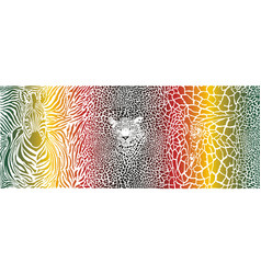 color pattern background with zebra leopard and vector image