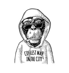 Monkey hipster dressed in hoodie with lettering vector