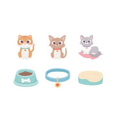 cats with collar cushion food bowl pets vector image