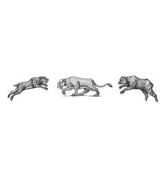 cave bear and lion panthera saber toothed tiger vector image