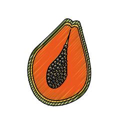 Papaya delicious fruit vector