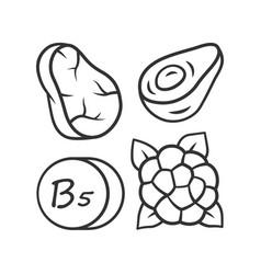 Vitamin b5 linear icon meat avocado vector