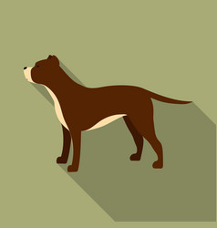 Pitbull icon in flat style for web vector