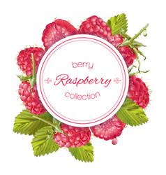 raspberry round banner vector image