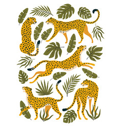 set leopards or cheetahs and tropical vector image