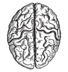 Top view cerebrum vintage vector