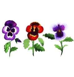 pansies vector image