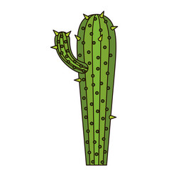 white background with cactus with small branch and vector image vector image